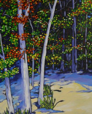 Christi Dreese beech trees