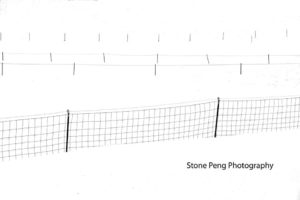Four Fence Line by Stone Peng
