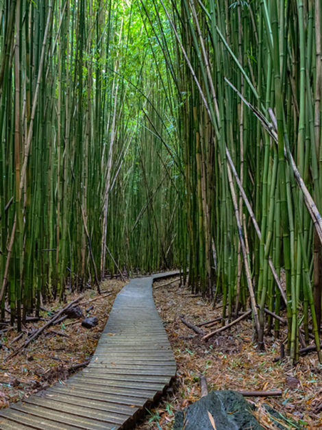 Blanketed-in-Bamboo-(C2C-Web)