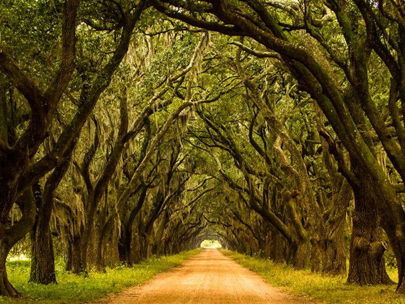 Whitney Plantation visit, Live Oaks, New Orleans
