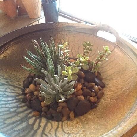 succulents in a Richard Aerni ceramics plattr